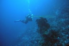 diving-974385_960_720