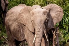 elephant-2982678_960_720