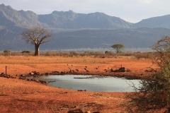 kenya-2165639_960_720