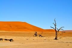 desert-2201707_960_720