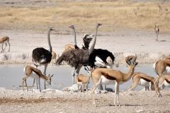 ostrich-63352_960_720