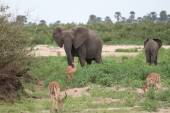 elephant-2155321_960_720