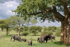 elephant-289134_960_720