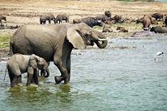elephant-1535882_960_720