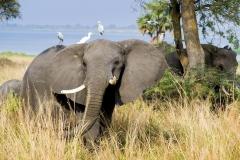 elephant-2108855_960_720