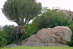 serengeti-14781_960_720